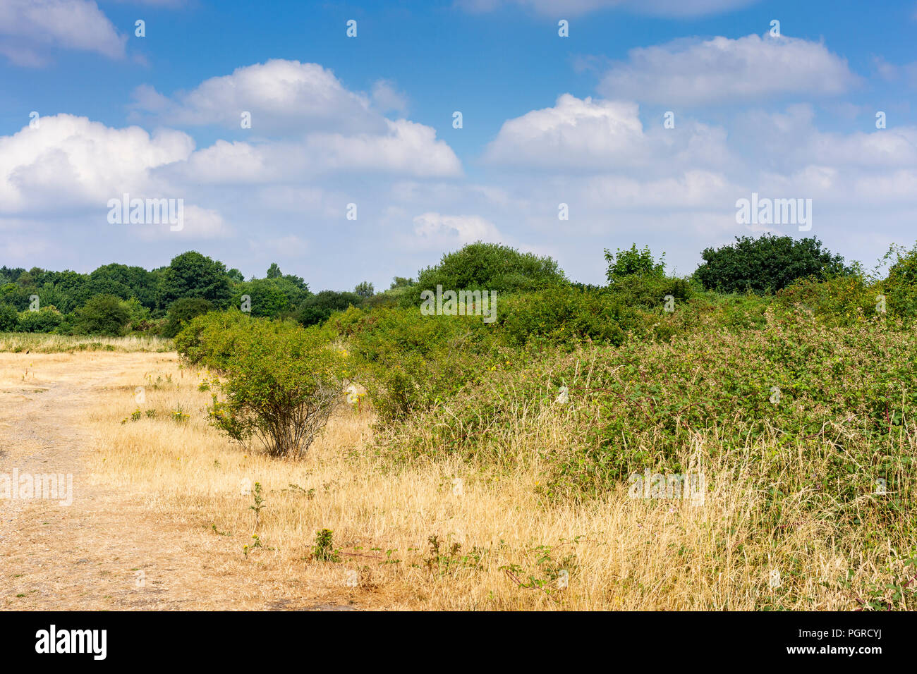 View of common land on a hot sunny day in Dorset, UK Stock Photo