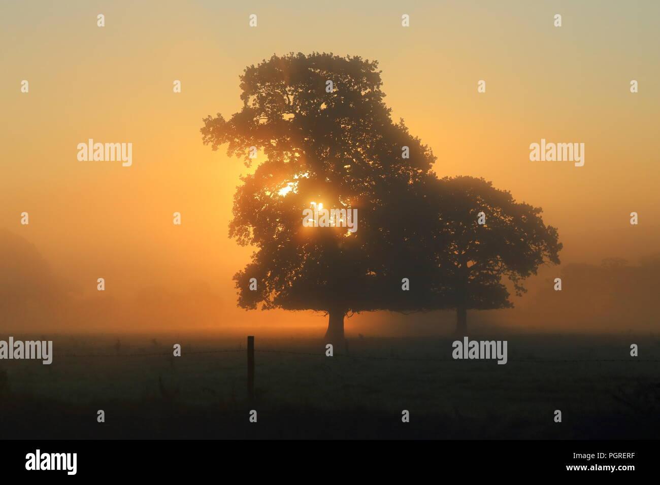 Sun rays shining through tree on the misty morning - Stock Image