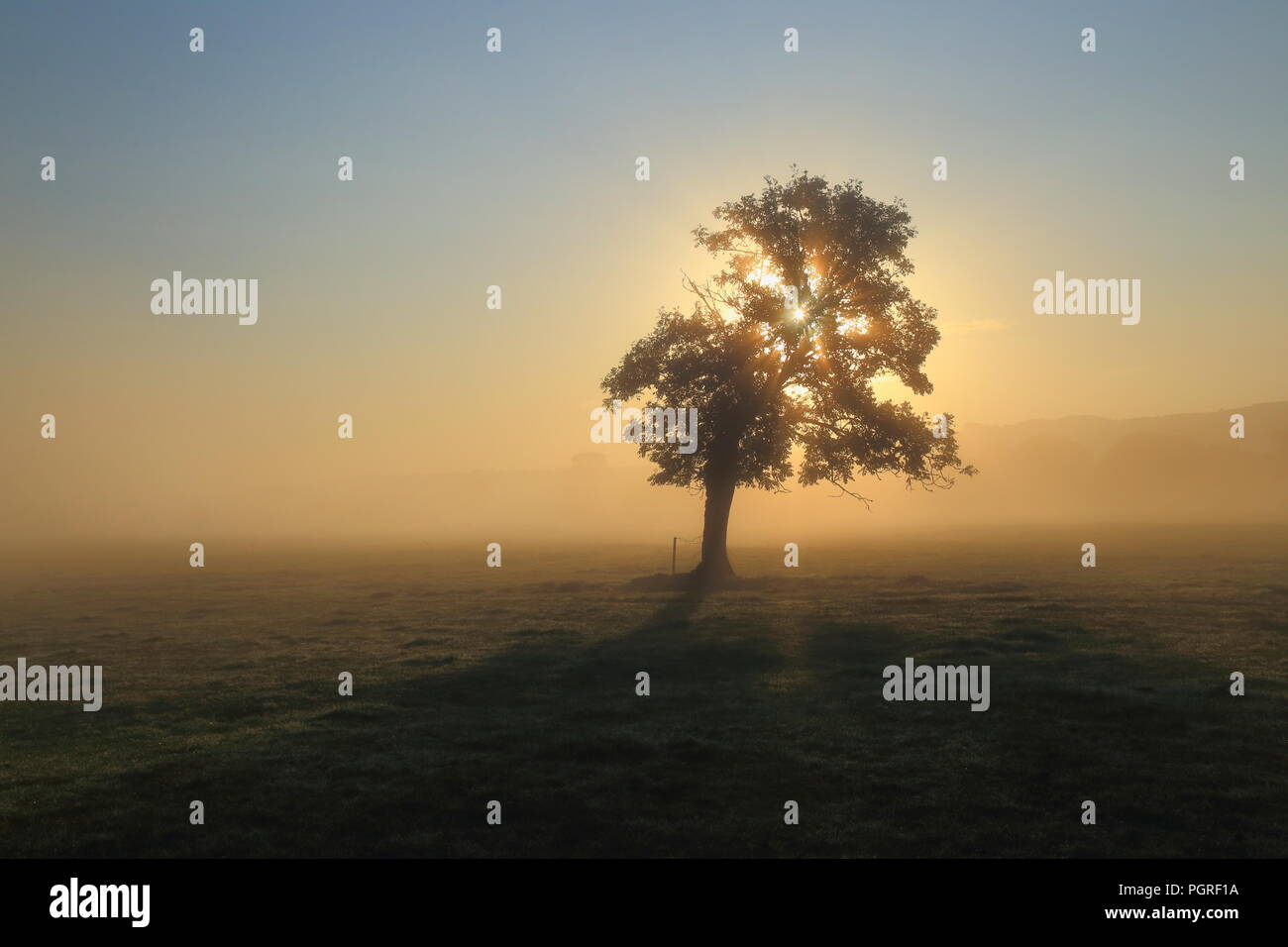 Rays of sunlight shining through tree on a misty morning in Axe Valley in East Devon Stock Photo