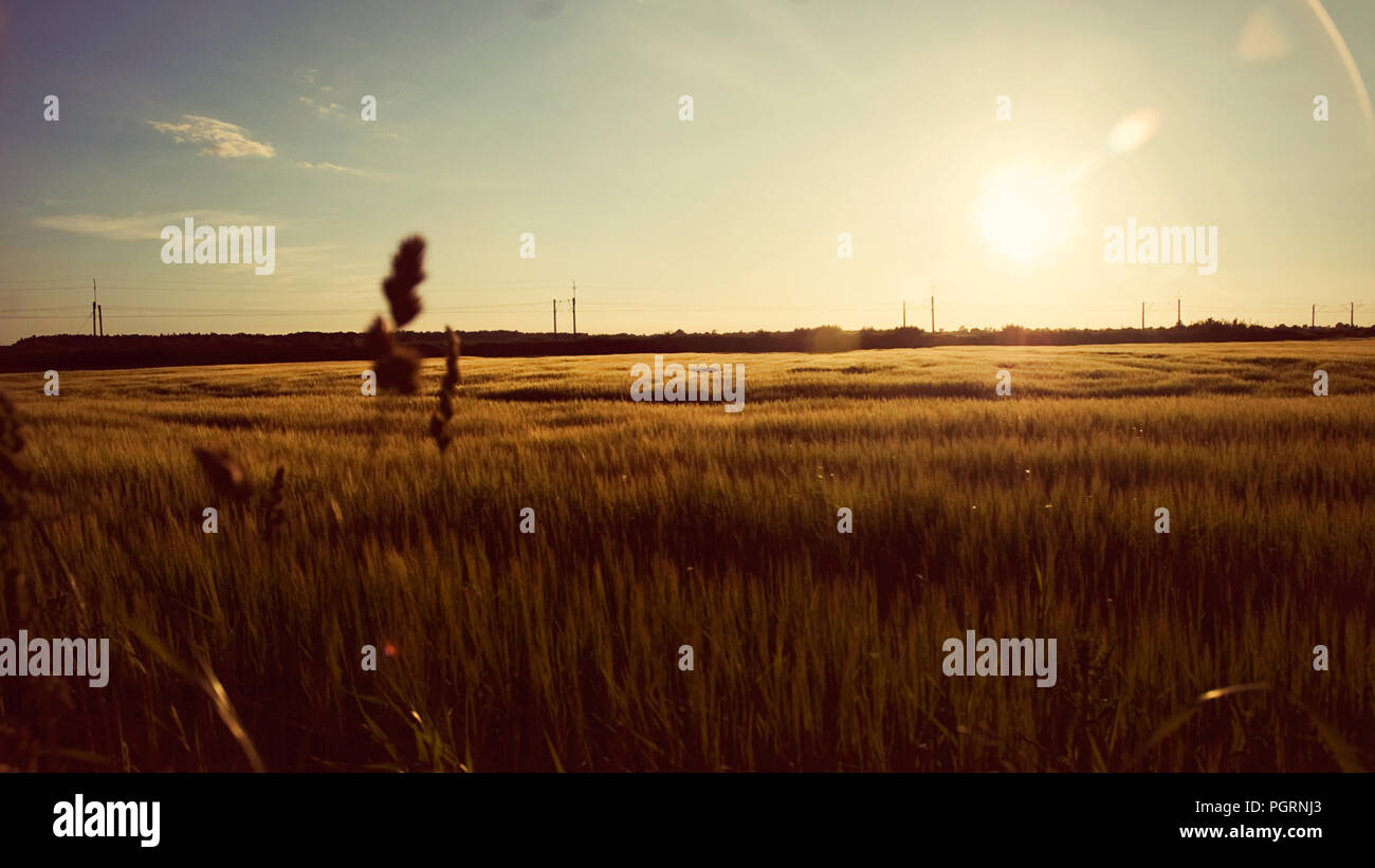 Sunset on the field with warm colors for copyspace background - Stock Image