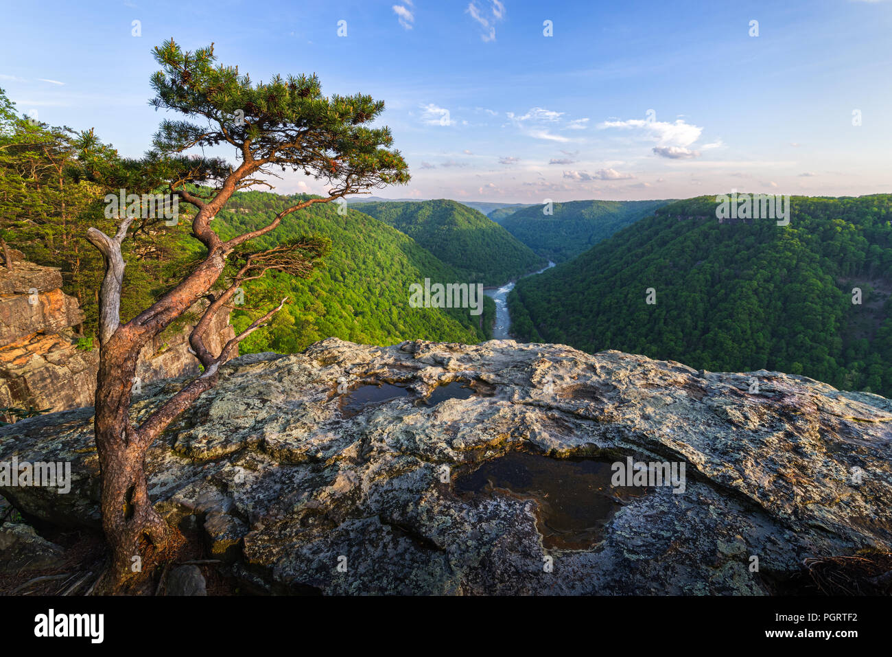 Along the cliff lines of Beauty Mountain, a stunted pine gestures toward the open landscape as if to introduce visitors to the New River Gorge of WV. - Stock Image