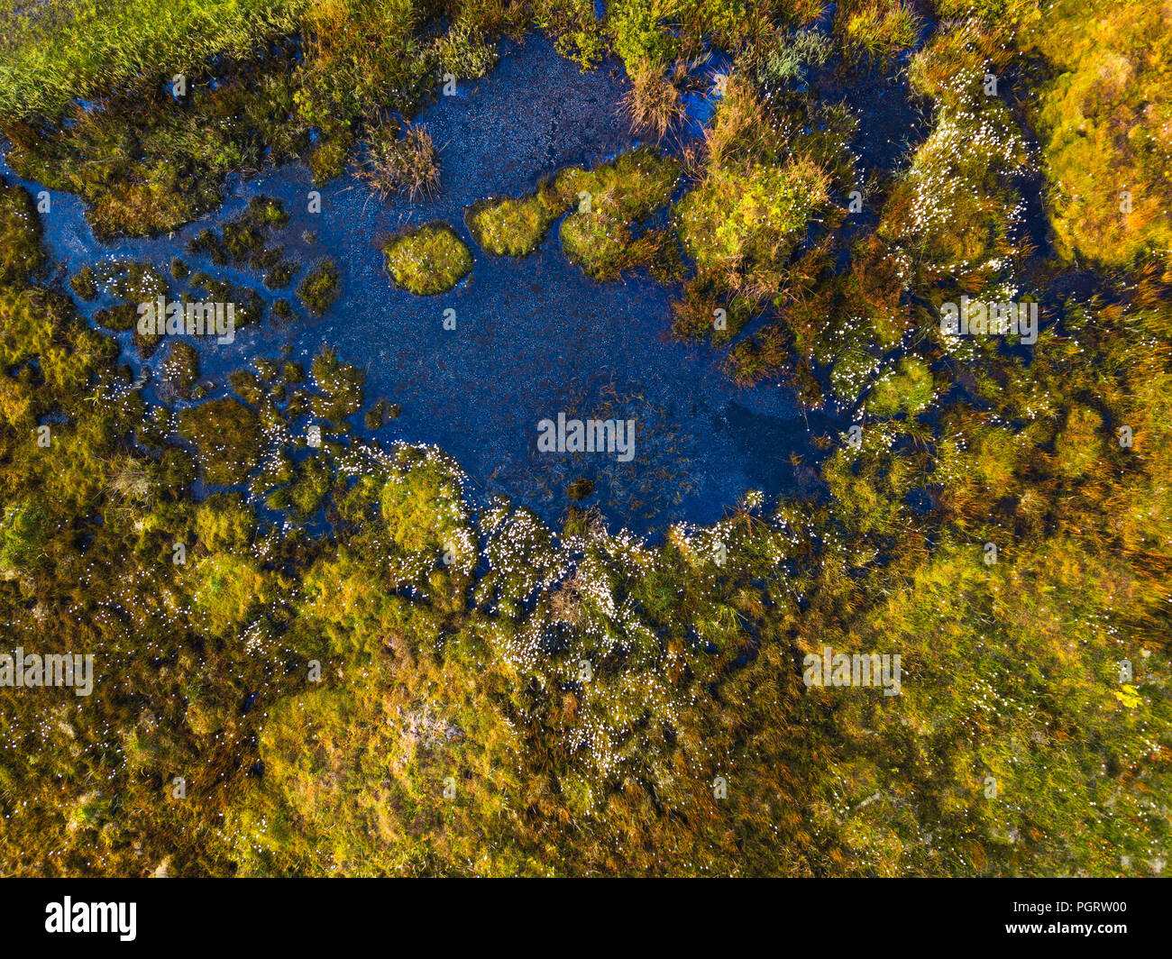 Aerial view of a boggy field full of cotton grass in Blackwater Falls State Park, West Virginia. - Stock Image