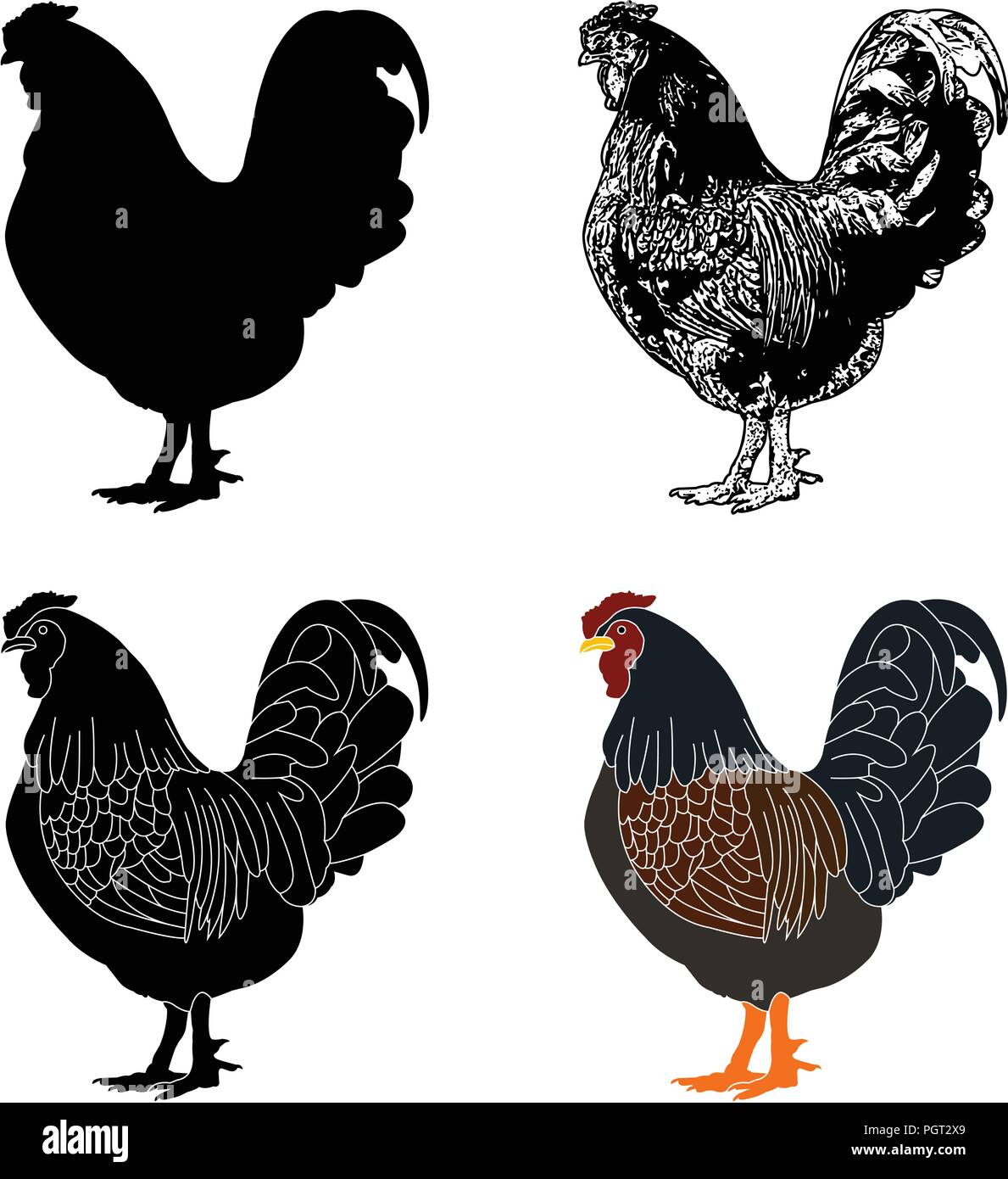hen silhouette,sketch and illustration - vector - Stock Vector