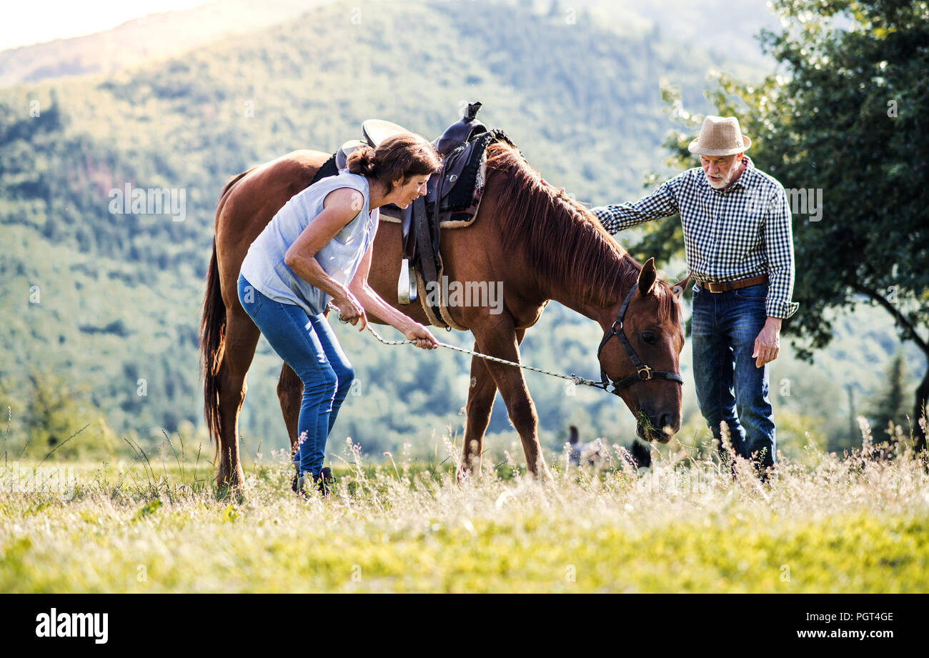 A Happy Senior Couple Holding A Horse Grazing On A Pasture Stock Photo Alamy