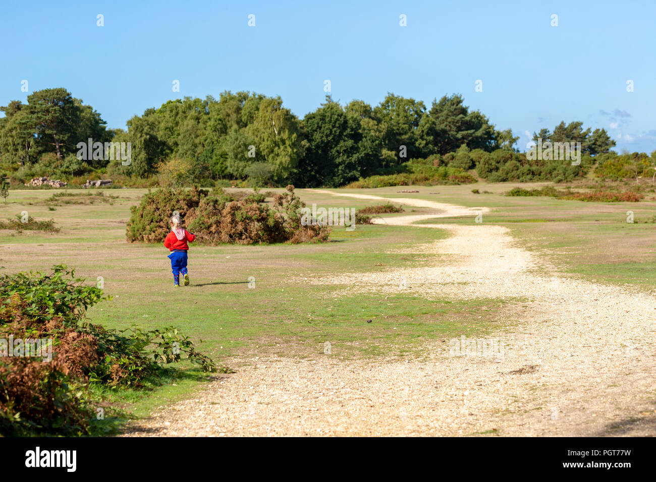 Toddler walking away from camera exploring off the track on New forest National park on sunny summers day. - Stock Image