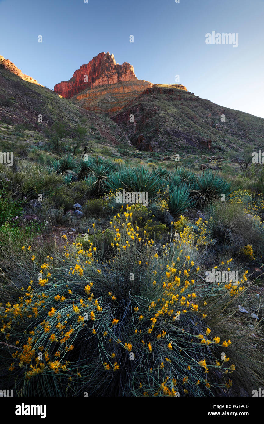 View from Cottonwood Campground in the North Kaibab Trail, Grand Canyon NP - Stock Image