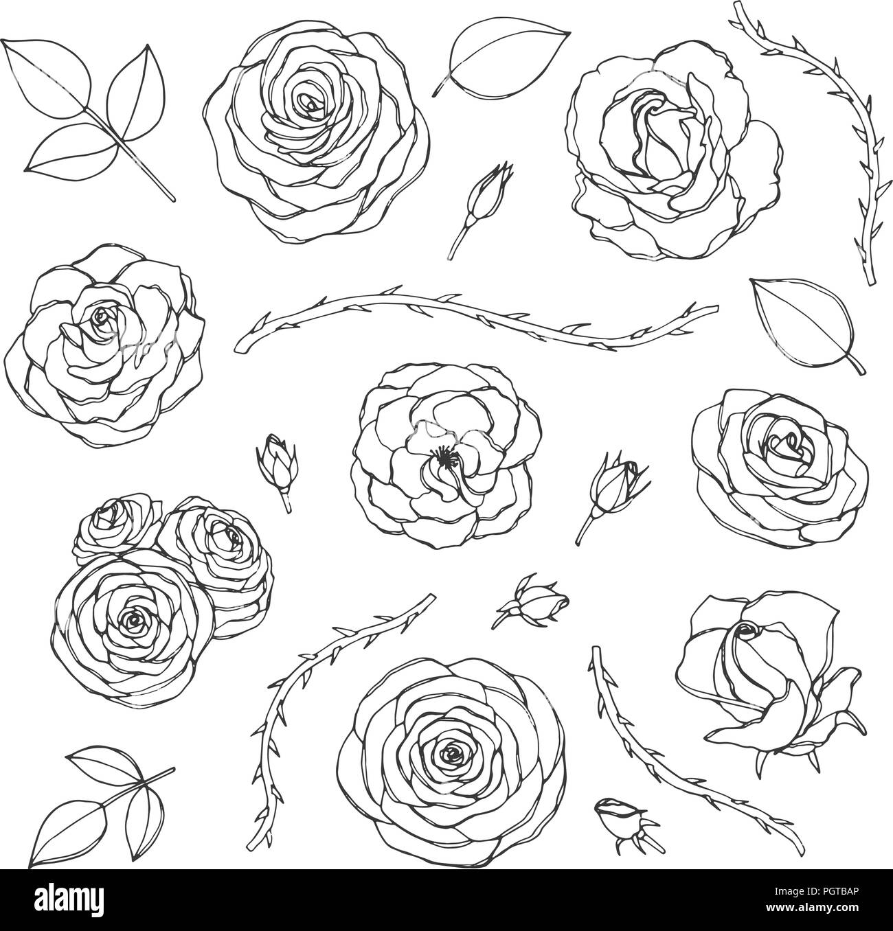 Vector hand drawn set of rose flowers with buds, leaves and thorny stems line art isolated on the white background. Floral collection of blossoms in s - Stock Image
