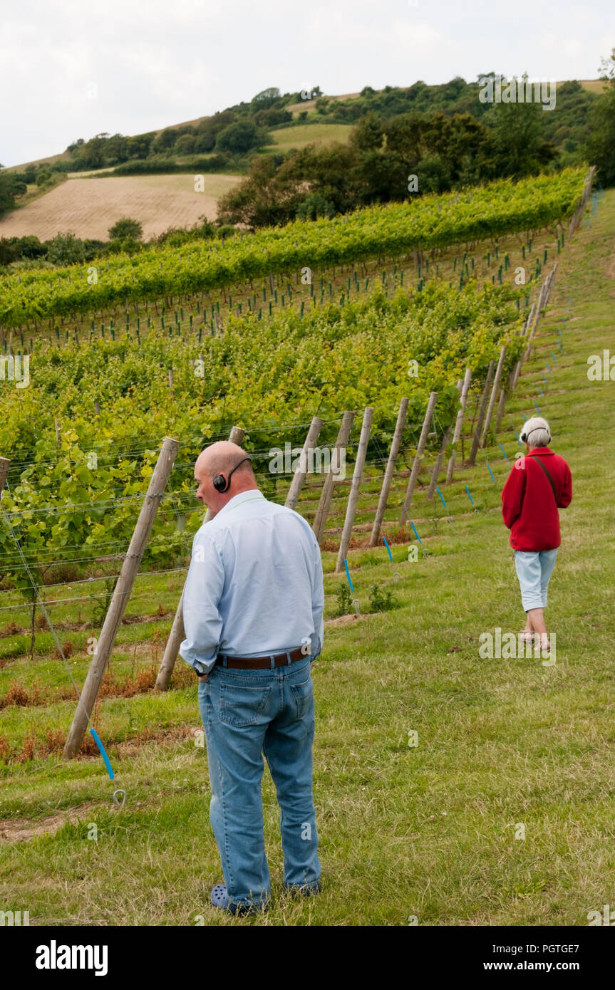 Visitors following a recorded self-guided tour around Adgestone Vineyard on the Isle of Wight - Stock Image