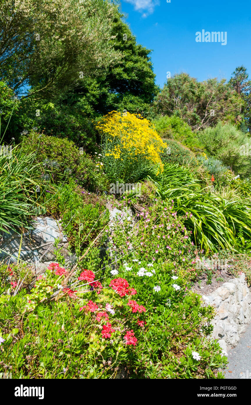 The Southern Hemisphere Garden at Ventnor Botanic Garden on the Isle of Wight. - Stock Image