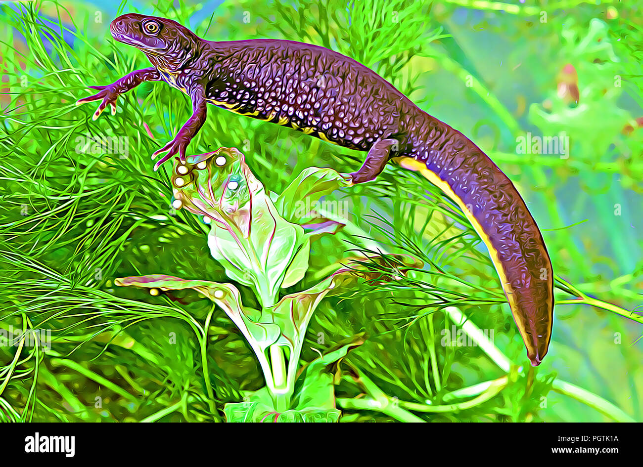 Newt Eggs Stock Photos Amp Newt Eggs Stock Images Alamy