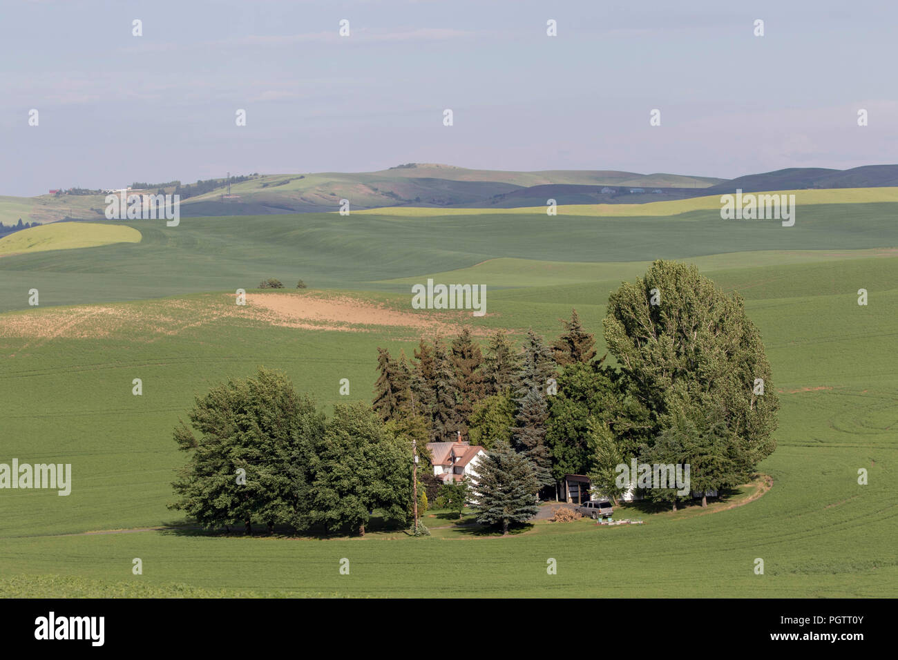 Farm land with beans and crops in the palouse region of