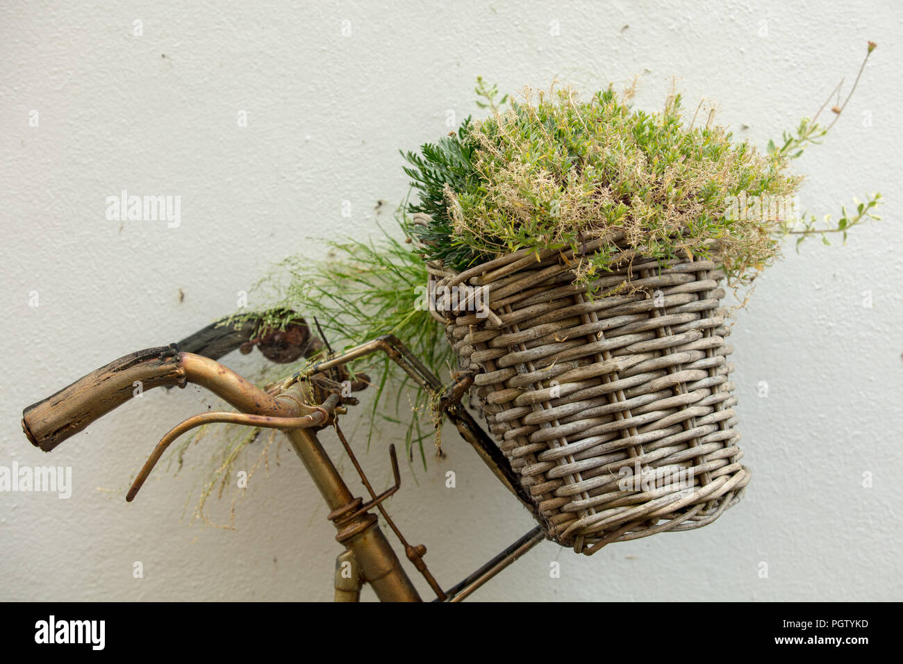 Creative use of a basket attached to a rusty bicycle, adding greenery, interest and talking point to a tiny front garden in old Hastings. East Sussex. - Stock Image