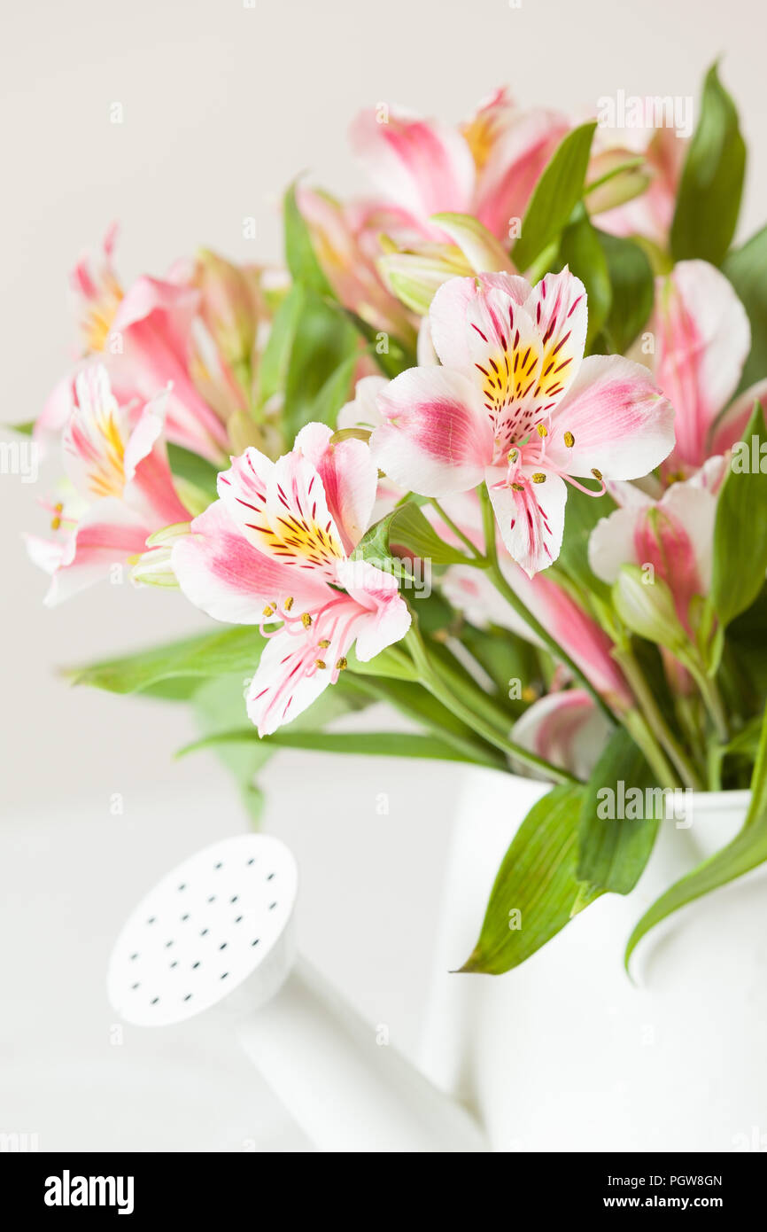 Pink And White Flowers In A White Pot Bunch Of Flowers On The Table