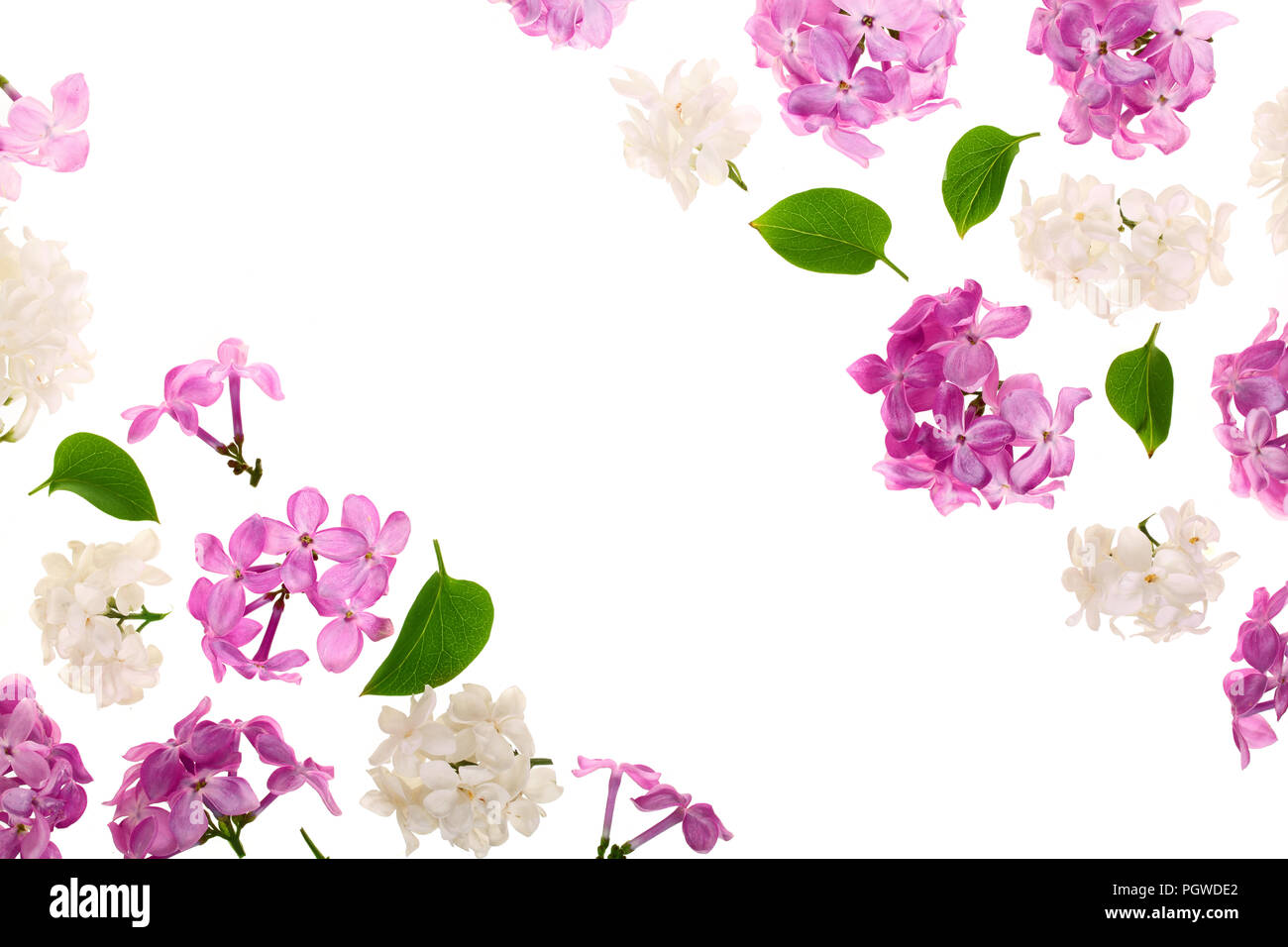 Frame With Lilac Flowers And Leaves Isolated On White Background