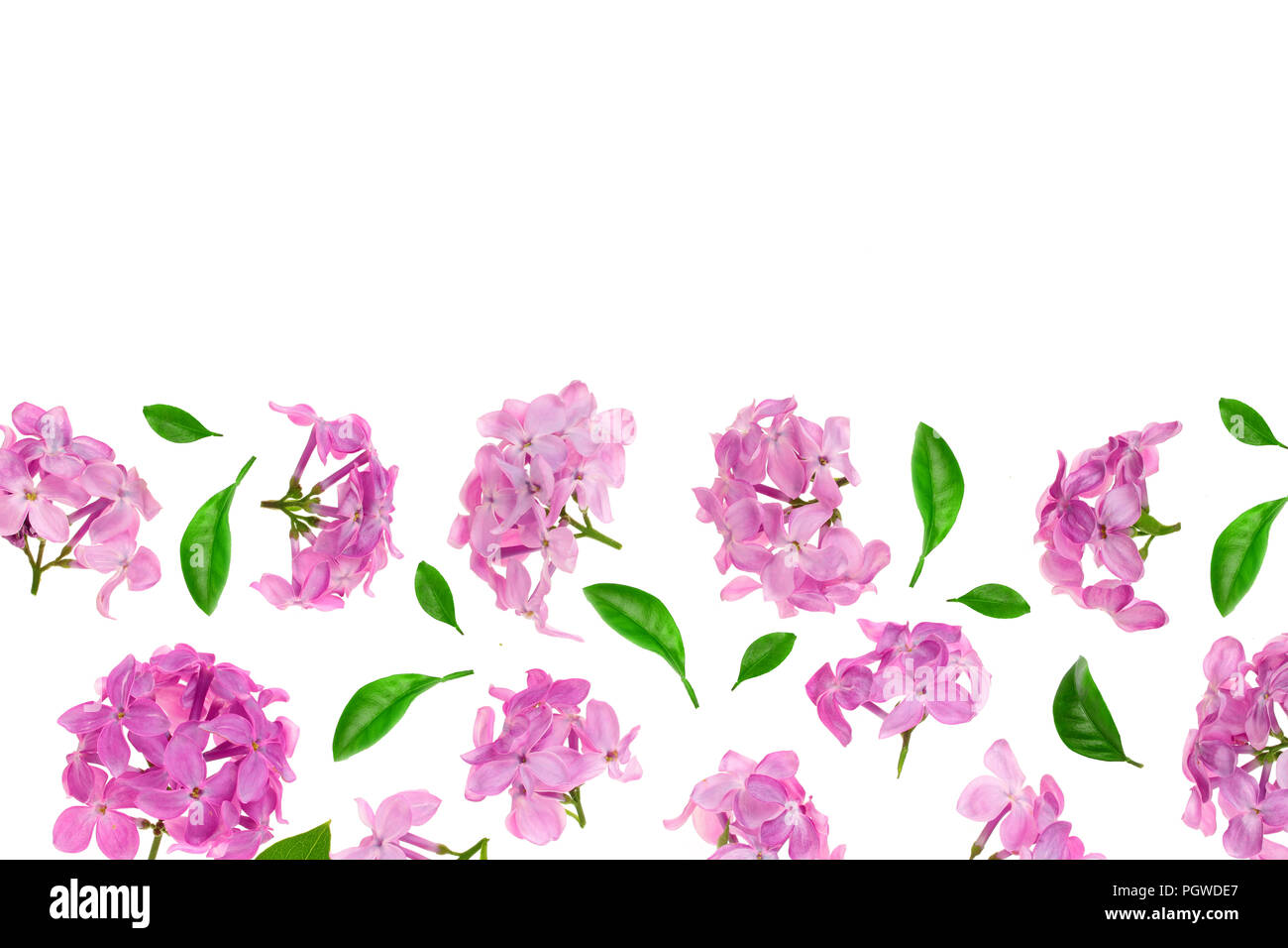 Lilac Flowers Branches And Leaves Isolated On White Background With