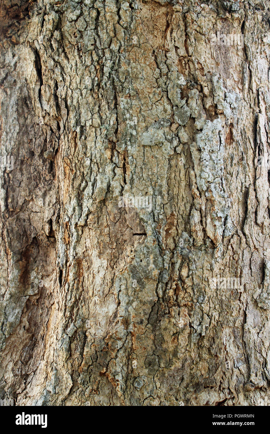 Stem Texture High Resolution Stock Photography And Images Alamy