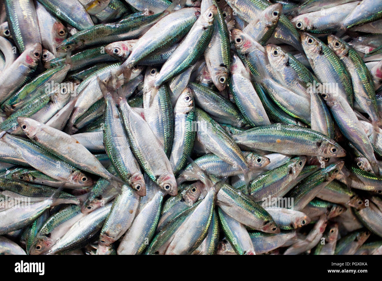 Fresh fish at a market in Indonesia's Belitung Island. - Stock Image