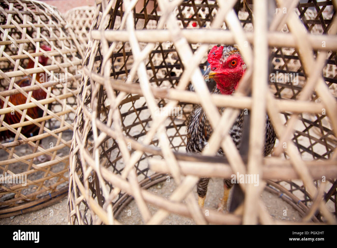 Chicken for sale in an Indonesian village. - Stock Image