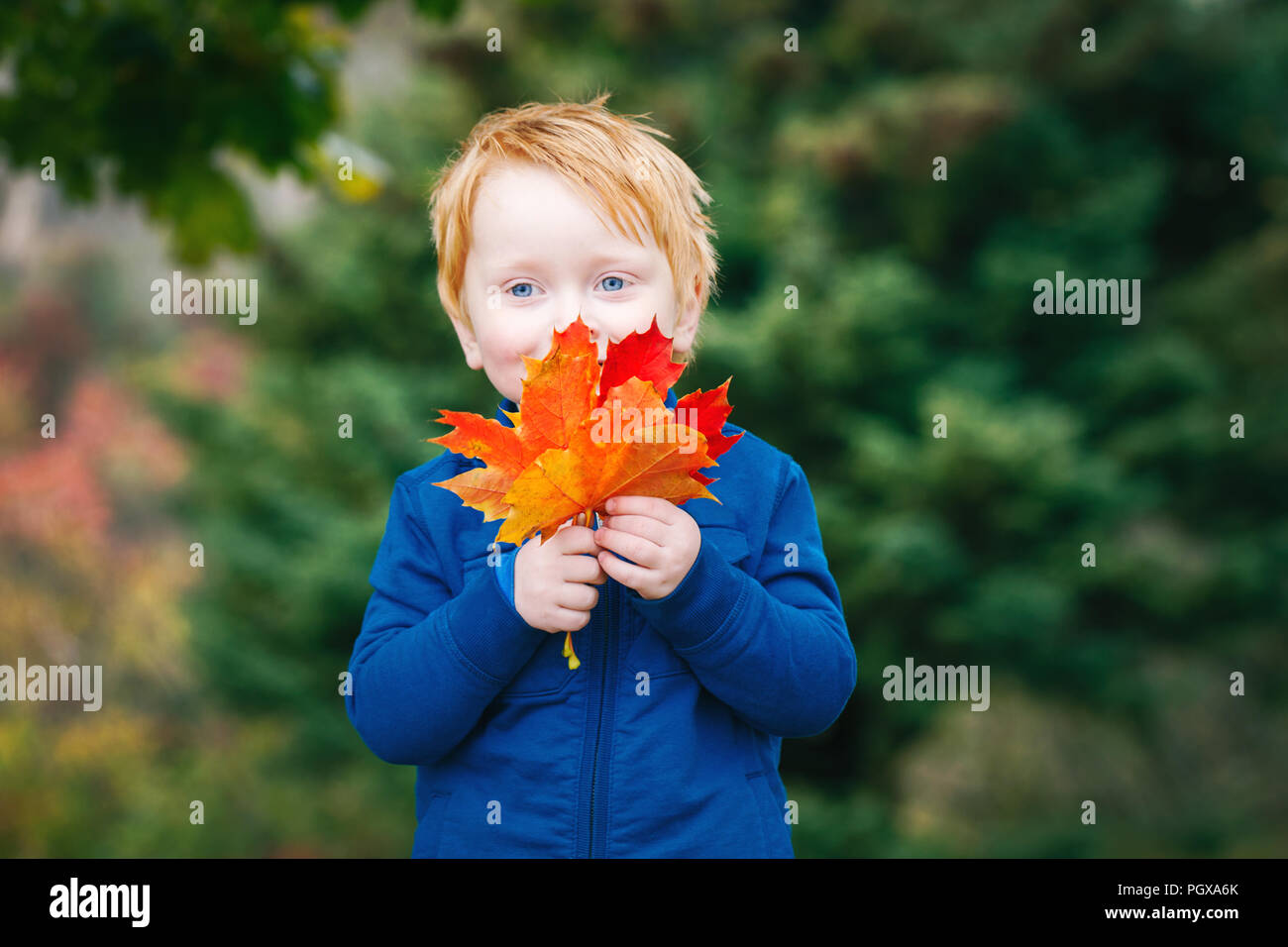 5e863ac6fde Portrait of cute funny adorable smiling Caucasian red-haired boy with blue  eyes holding autumn