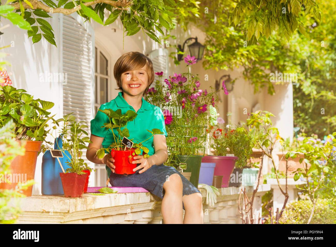 Portrait of happy preteen boy sitting on balustrade of balcony garden and holding pot with strawberries plant - Stock Image