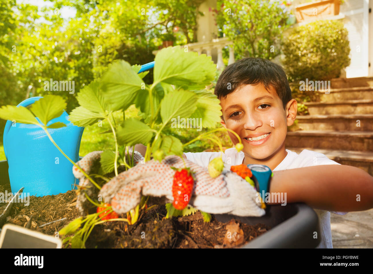Portrait of happy preteen boy, wearing gardening gloves, planting strawberries in container - Stock Image