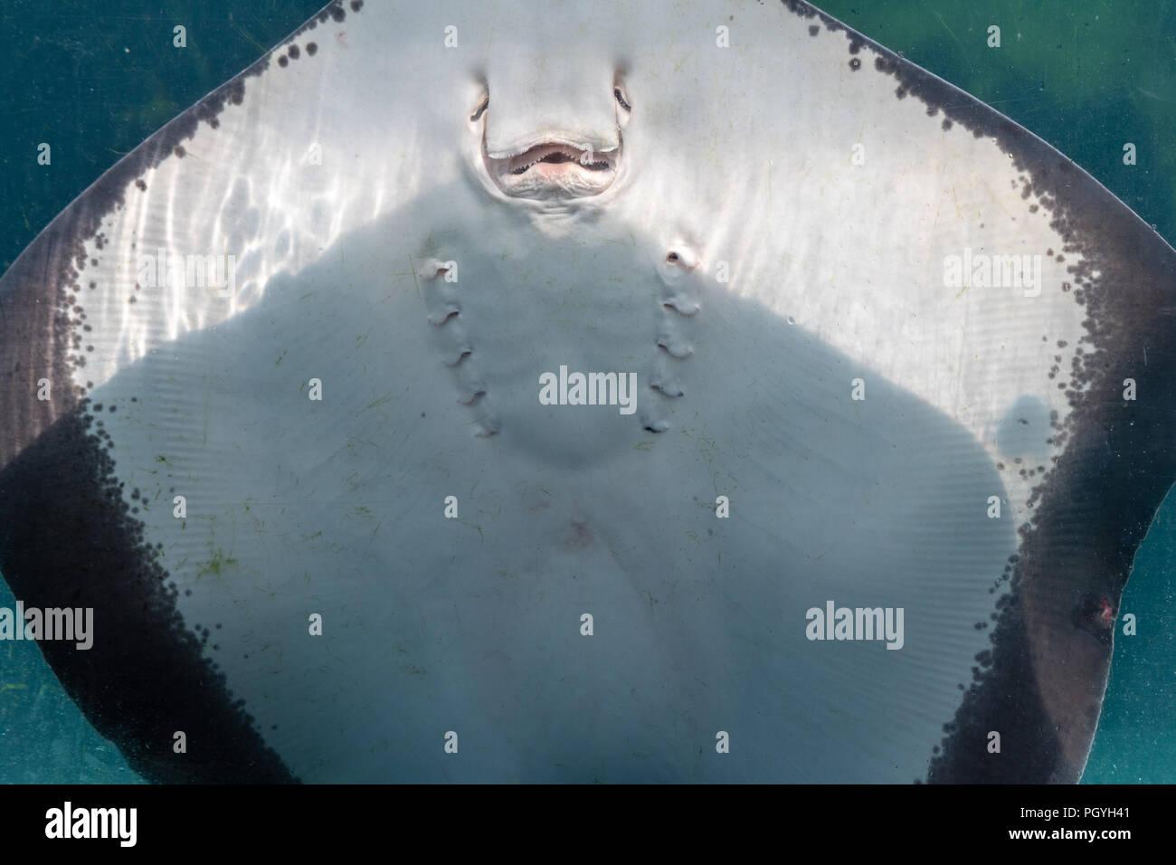 Vannas body undulates as paige licks her clit - 5 1