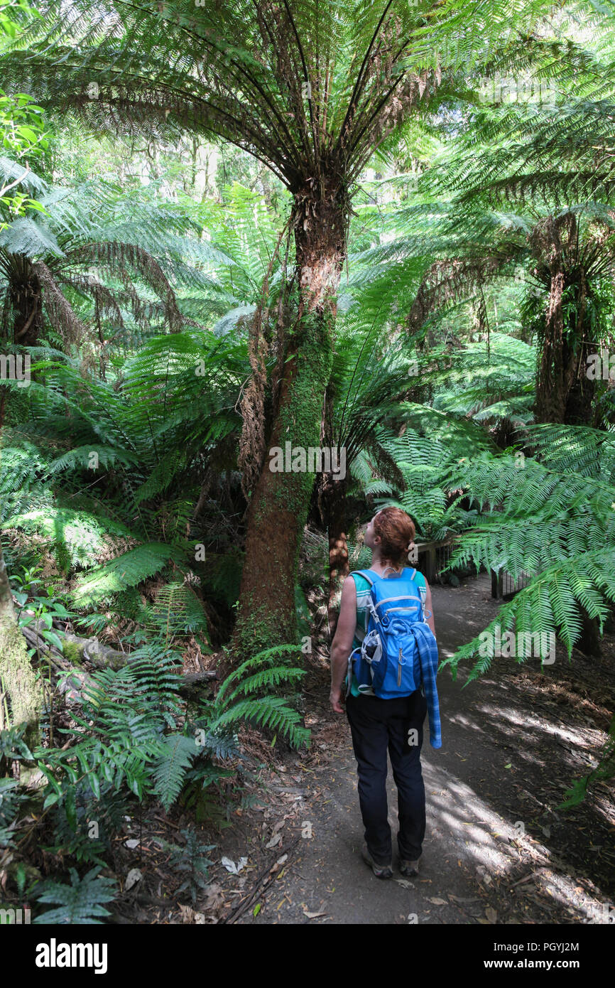 A woman enjoys the lush tree fern vegetation on a rainforest walk in Victoria in the Otway's. - Stock Image