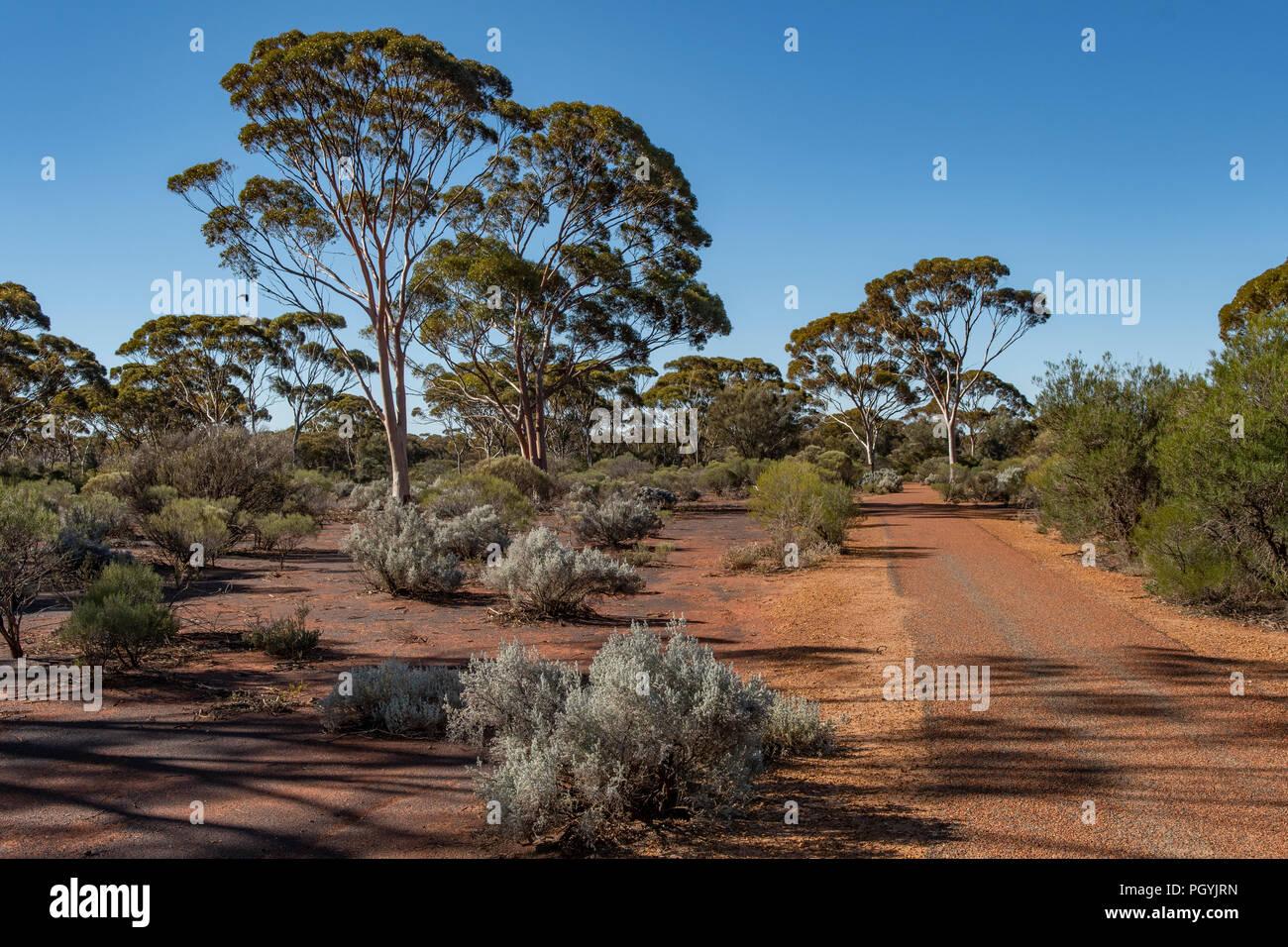 Karlkurla Bushland Park, Kalgoorlie, WA, Australia - Stock Image