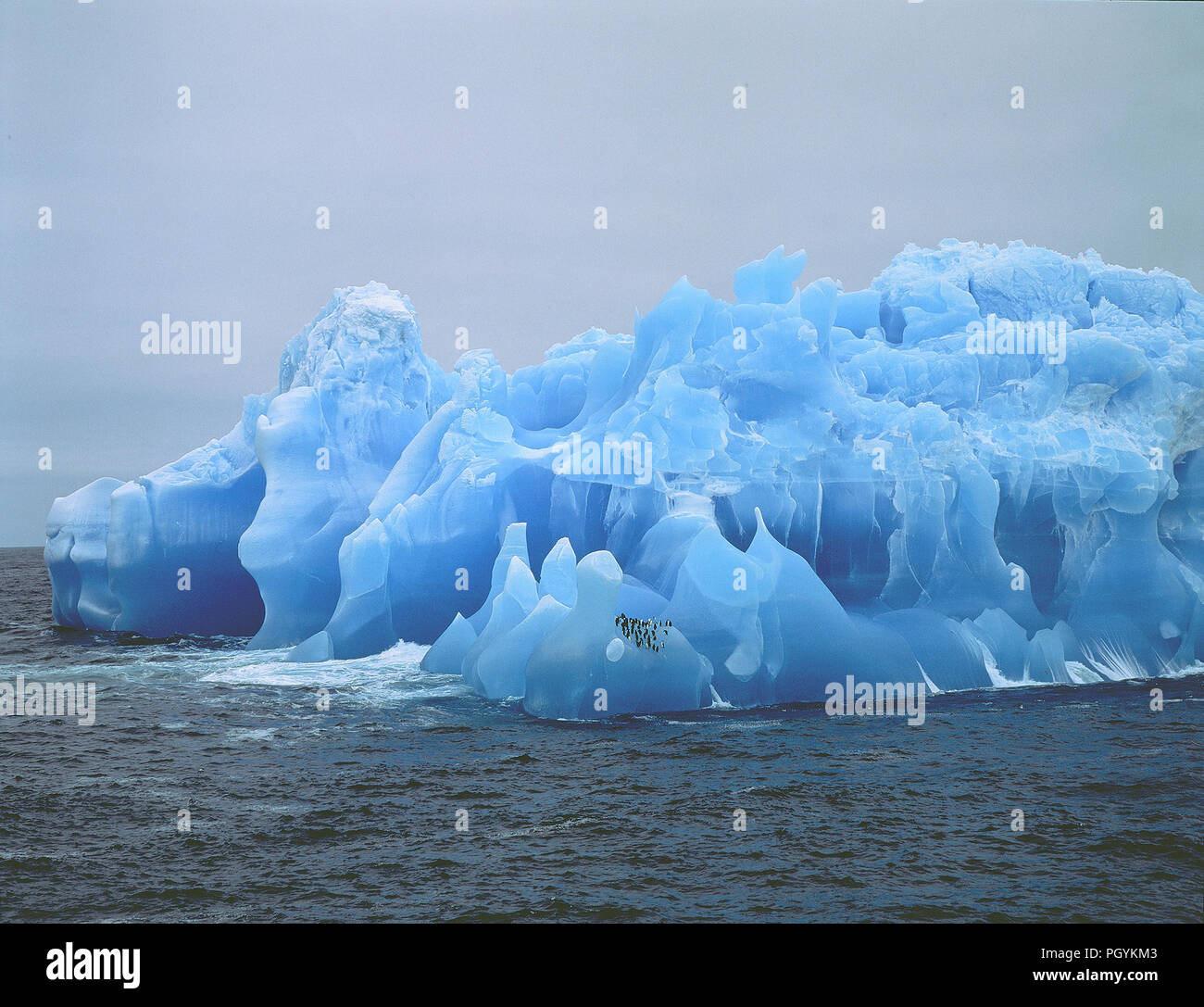 Iceberg with pingouins - Antartica - Stock Image