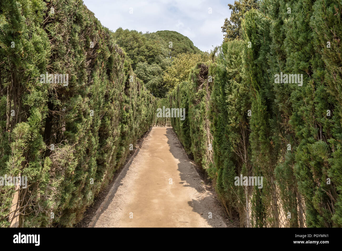 Path through trimmed cypress trees of hedge maze in Labyrinth Park of Horta. The maze has a trapezoidal shape similar to Minotaur labyrinth. - Stock Image