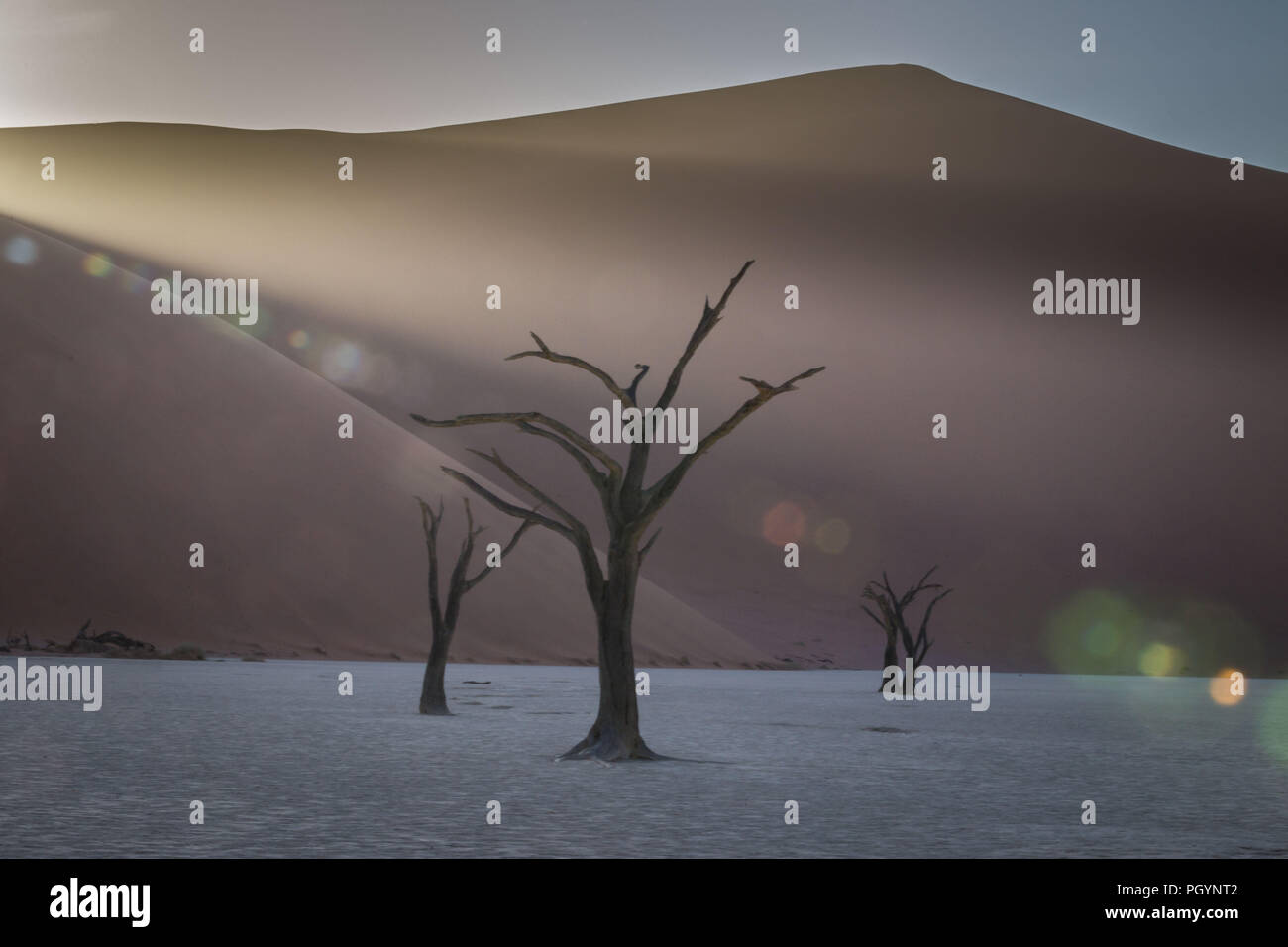Dead trees stand guard over Deadvlei in Namib-Naukluft National Park, Namibia; the pan once had water from the Tsauchab river, but a changing environm - Stock Image