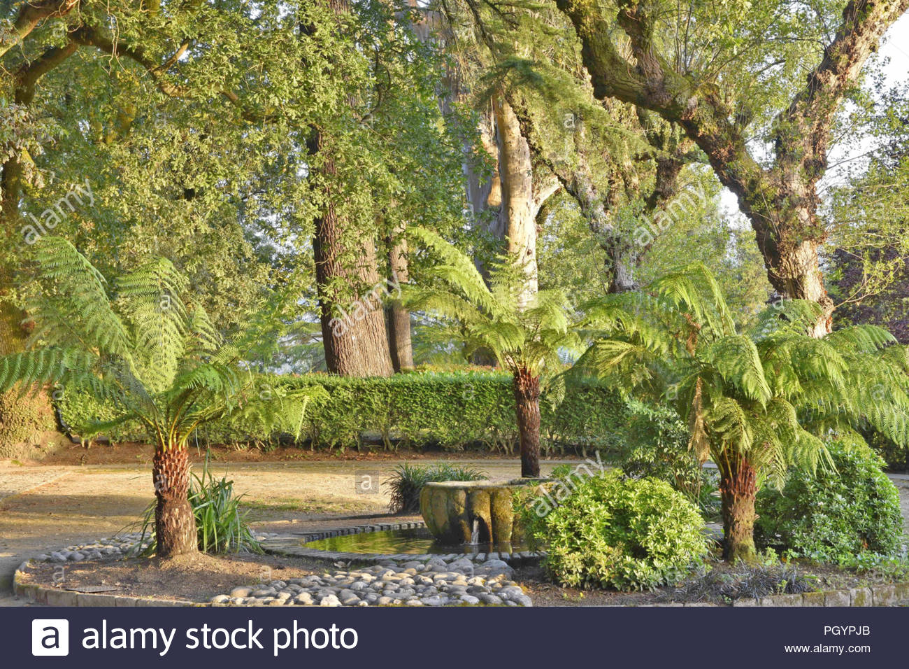 Old trees and fountain, lush green foliage, Alameda park in Santiago de Compostela Galicia Spain Europe. - Stock Image