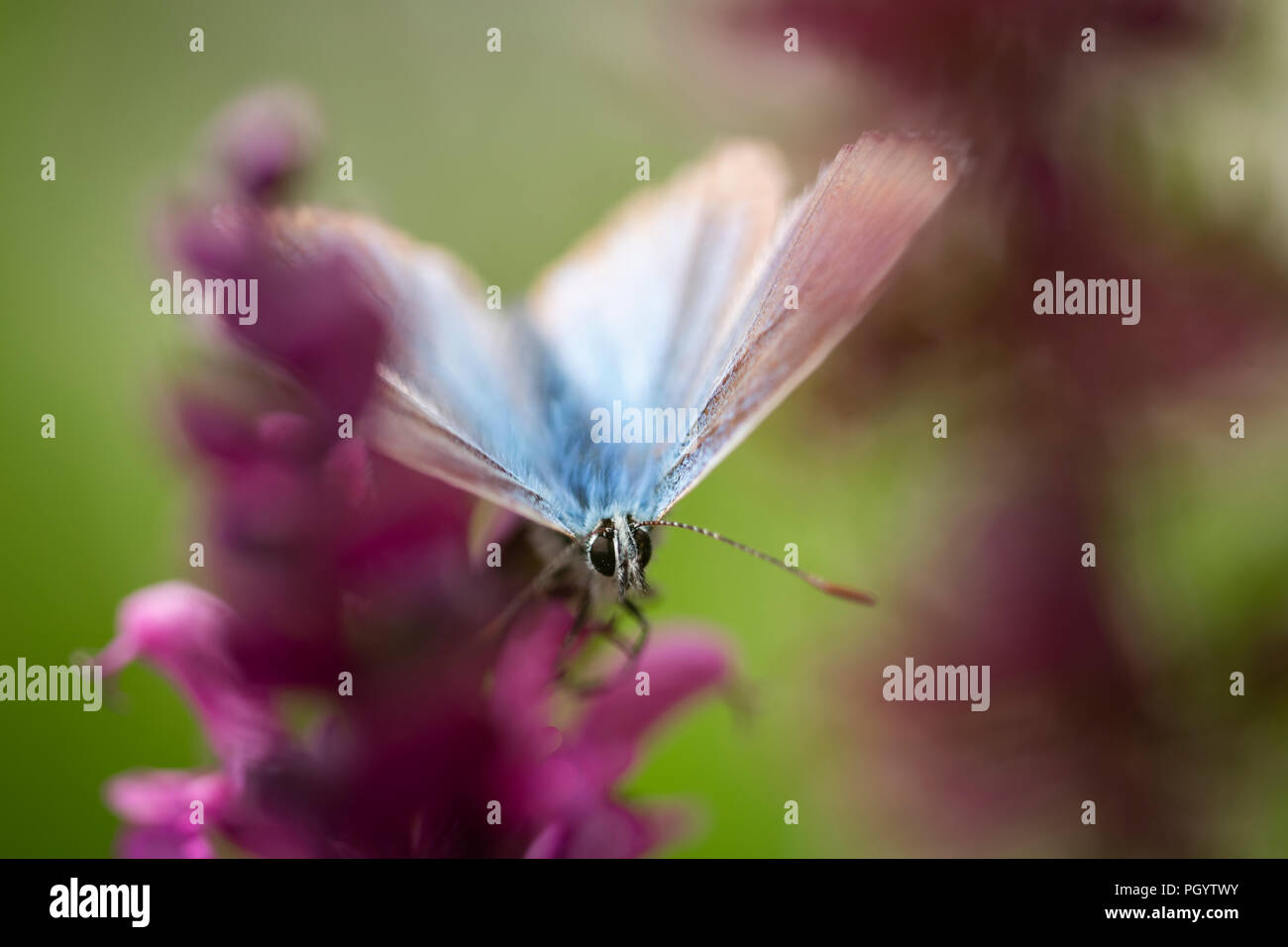 Insects Arbey Lanna Stock Photo