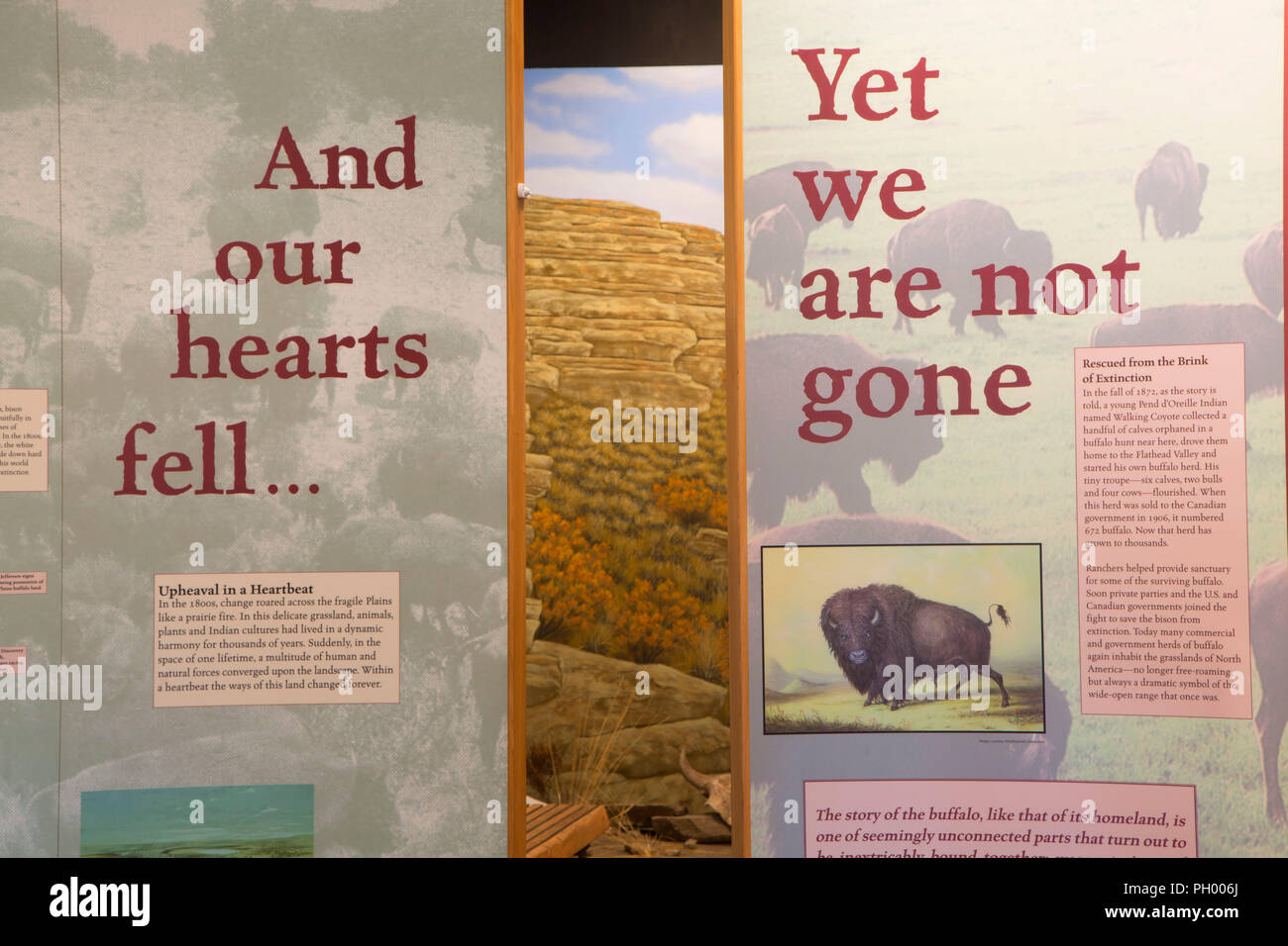 Visitor center display, First Peoples Buffalo Jump State Park, Montana - Stock Image
