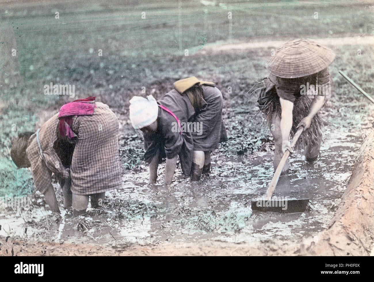 [ 1890s Japan - Rice Farming ] —   Three farmers working in a rice field. The farmer on the right is wearing a sugegasa (conical hat).  19th century vintage albumen photograph. - Stock Image