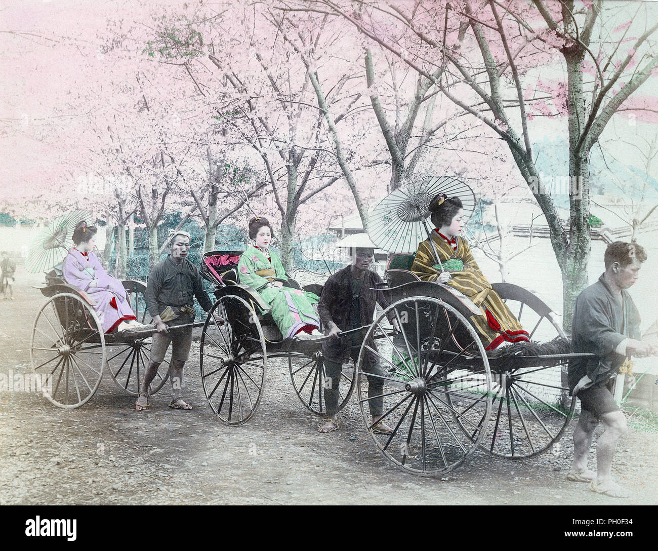 [ 1890s Japan - Three Rickshaws with Women in Kimono ] —   Three women in kimono and rickshaw pullers wearing conical hats (sugegasa) below cherry blossom. Two of the women carry parasols.  19th century vintage albumen photograph. - Stock Image