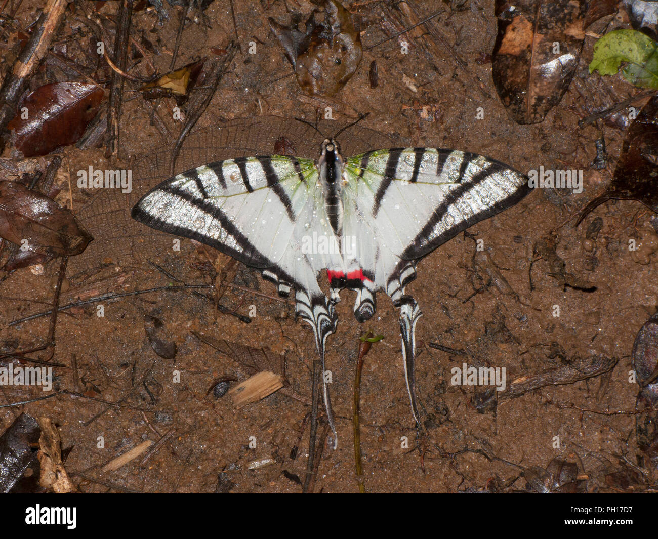 State Butterfly Stock Photos & State Butterfly Stock Images - Alamy