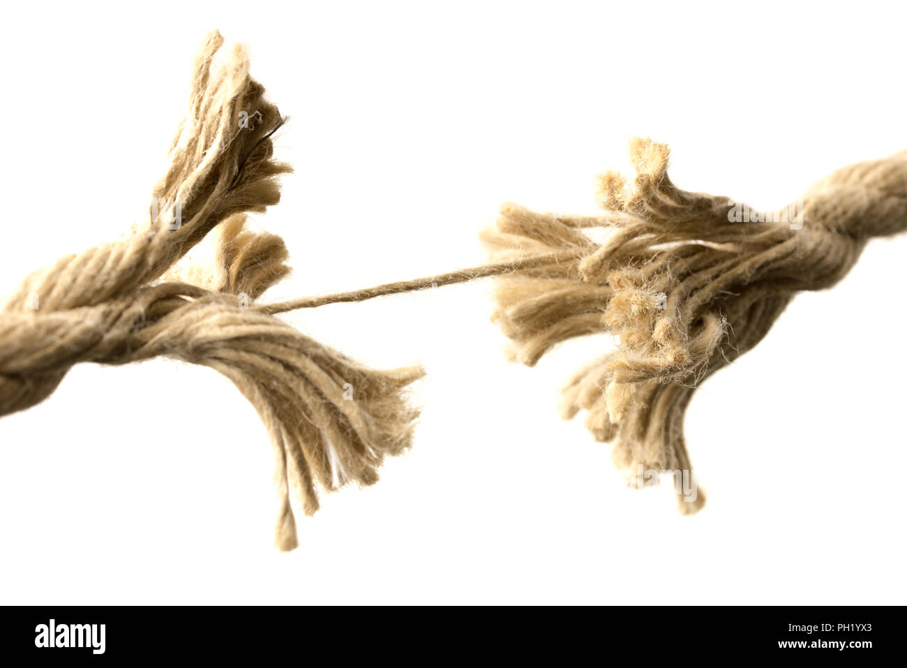 Close-up of a rope splitting apart held together by one last thread, concept of fragility and division, with copy space on white. - Stock Image