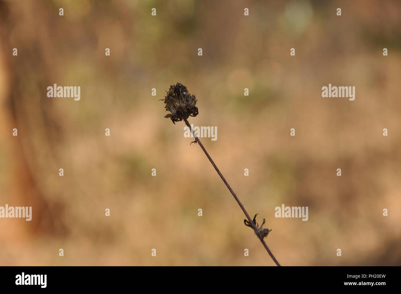 single upright plant - Stock Image