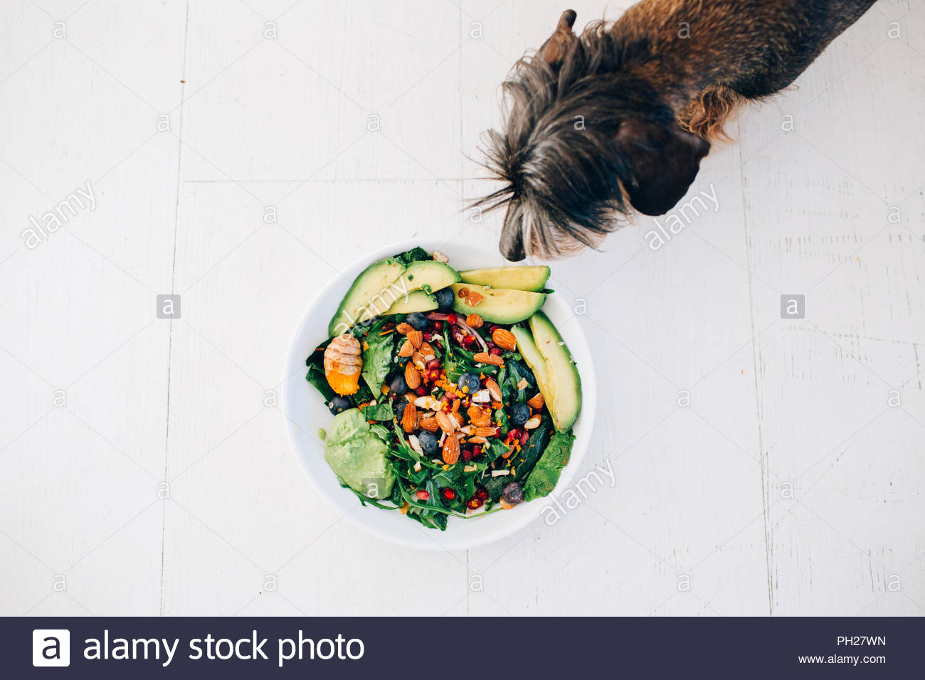 Dog sniffing salad with lettuce and avocado - Stock Image