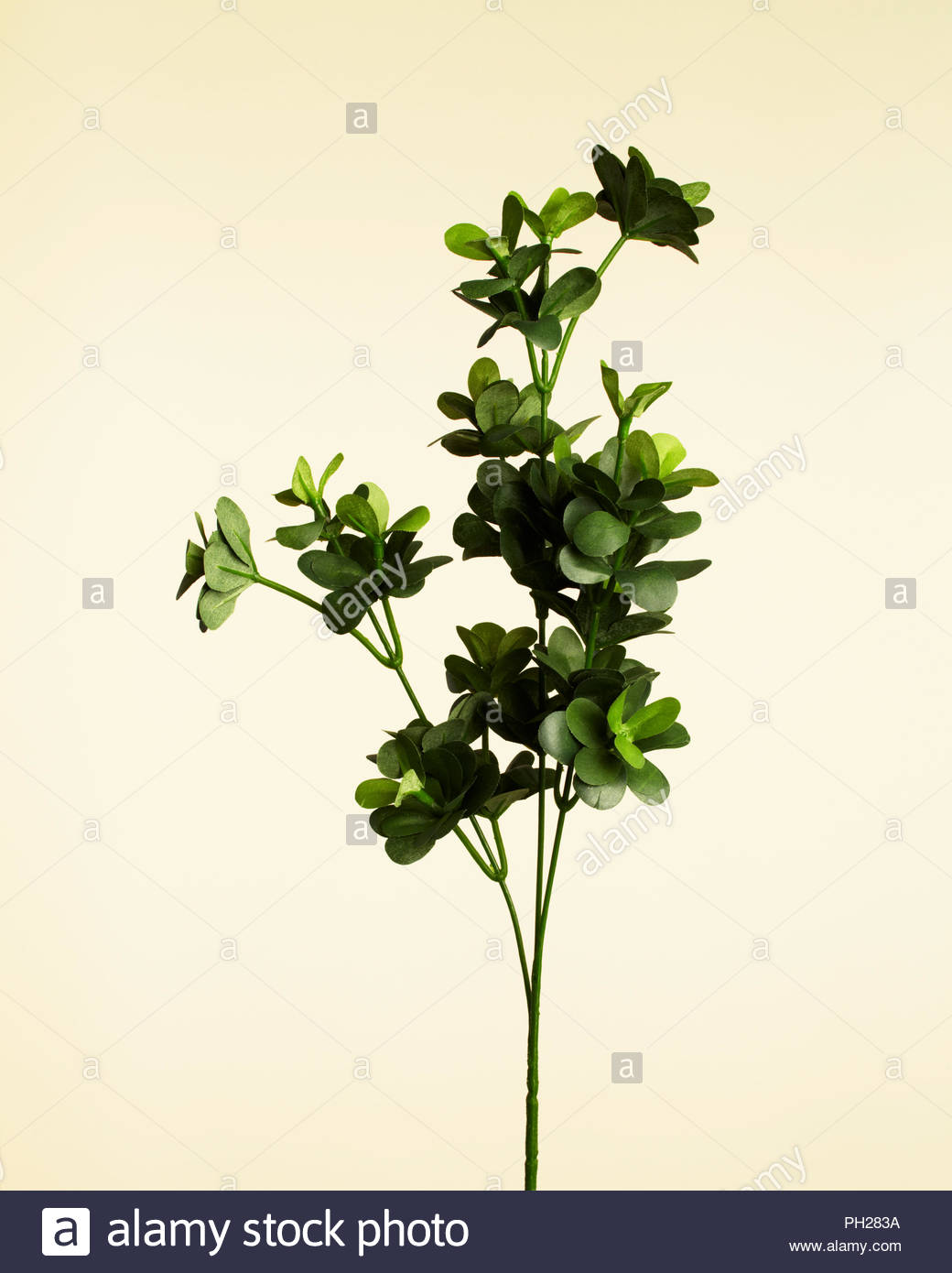 Twig with leaves - Stock Image