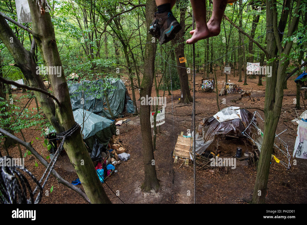 Germany, Morschenich. 29th Aug, 2018. Two activists sit on a tree house in the Hambach Forest. The camp will demonstrate against the clearing of the Hambach forest for opencast lignite mining. North Rhine-Westphalia's Prime Minister Laschet (CDU) will be asking the press questions on current political issues on 30.09.2018. In the centre is probably the heated location in the Hambach Forest. Credit: Christophe Gateau/dpa/Alamy Live News - Stock Image