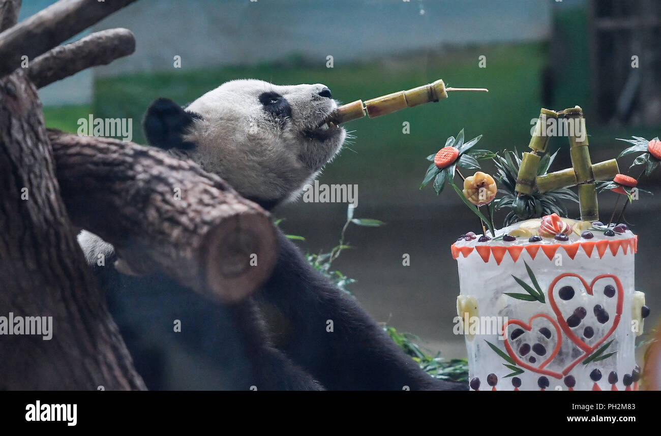 Taipei's Taiwan. 30th Aug, 2018. Giant panda Yuan Yuan enjoys a special birthday cake at Taipei Zoo in Taipei, southeast China's Taiwan, Aug. 30, 2018. Born two days later than Yuan Yuan in 2004, giant panda Tuan Tuan also celebrated its 14th birthday together with Yuan Yuan on Thursday. Yuan Yuan and Tuan Tuan were given as a goodwill gift to Taiwan by the Chinese mainland. Credit: Xue Yubin/Xinhua/Alamy Live News - Stock Image