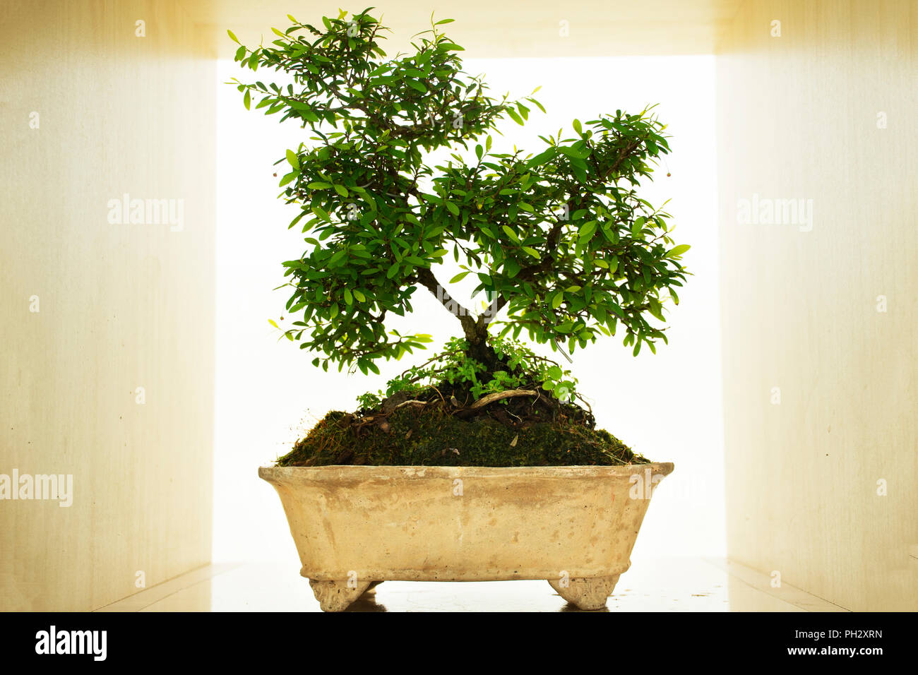 DIY small garden and little tree and Bonsai for show and