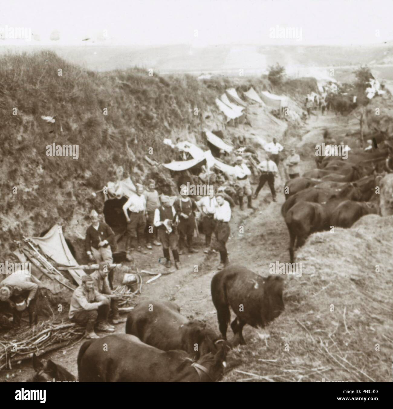 Cavalry, c1914-c1918. French soldiers with horses. Photograph from a series of glass plate stereoview images depicting scenes from World War I (1914-1918). - Stock Image