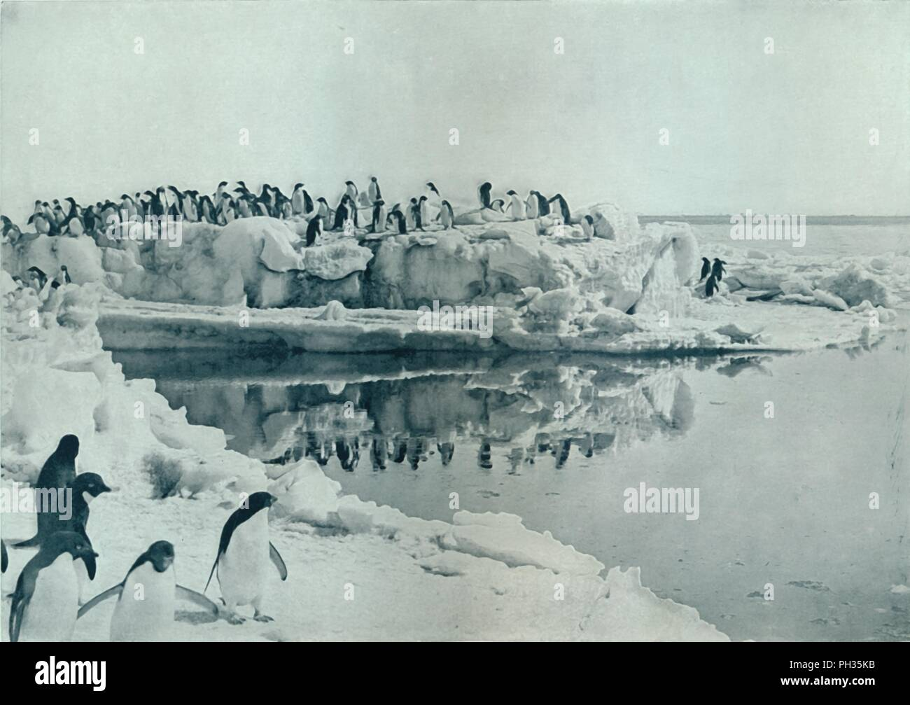 'Penguins on Ice-Foot', c1911, (1913). The final expedition of British Antarctic explorer Captain Robert Falcon Scott (1868-1912) left London on 1 June 1910 bound for the South Pole. The Terra Nova Expedition, officially the British Antarctic Expedition (1910-1913), included a geologist, a zoologist, a surgeon, a photographer, an engineer, a ski expert, a meteorologist and a physicist among others. Scott wished to continue the scientific work that he had begun when leading the Discovery Expedition to the Antarctic in 1901-04. He also wanted to be the first to reach the geographic South Pole. S - Stock Image