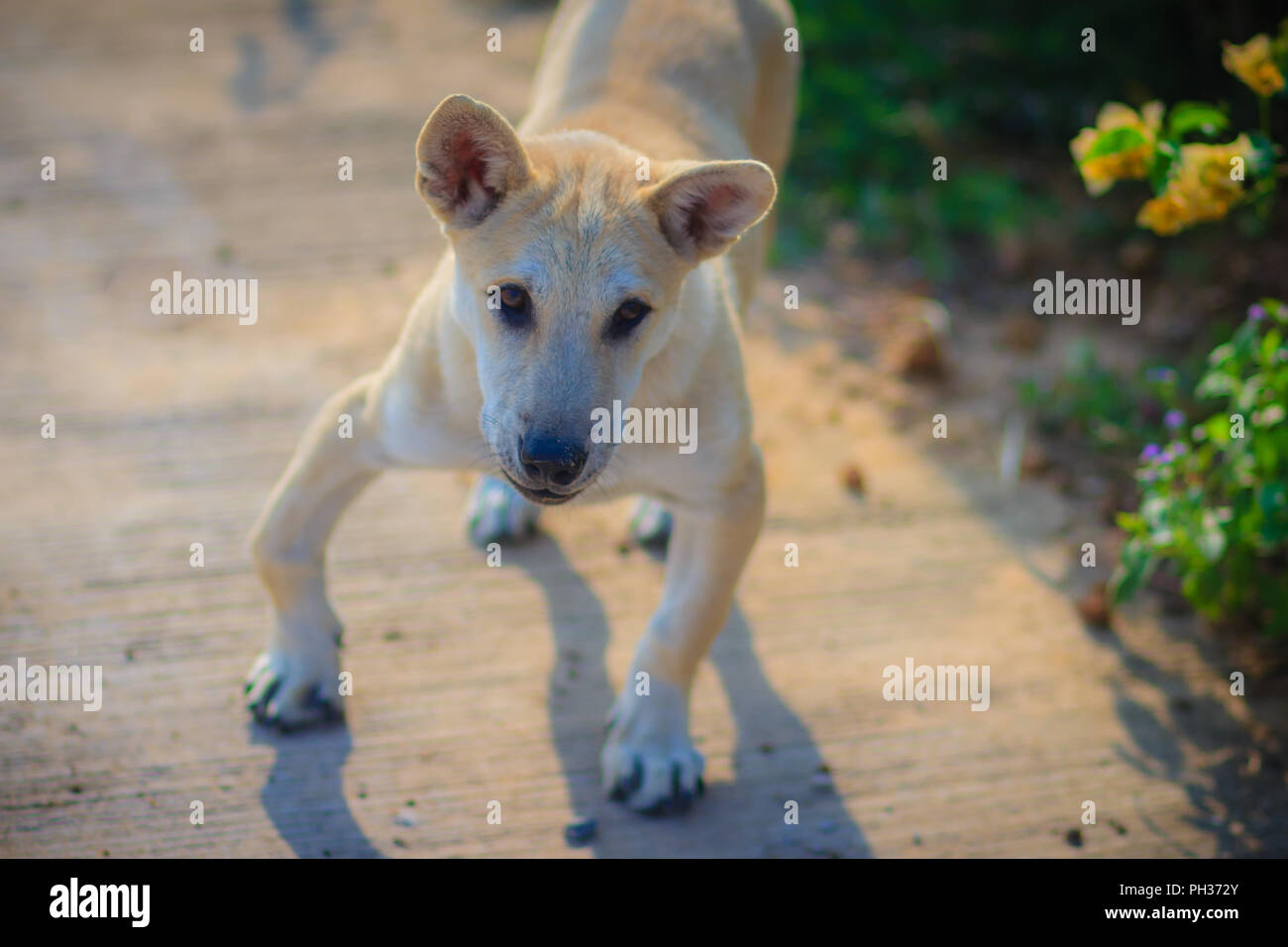 how to stop dog barking in morning