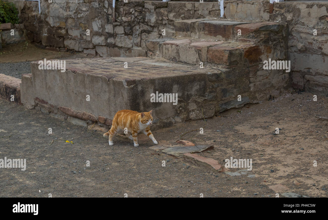 Ginger-colored cat walking on a dusty pavement near old weathered concrete steps image with copy space in landscape format - Stock Image