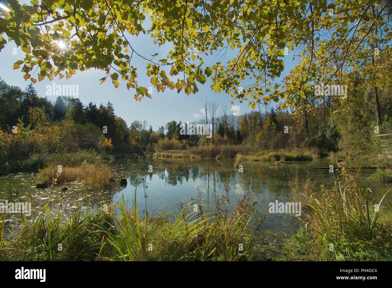 The Marzoller Au, Germany's southernmost, still-preserved riparian forest reserve with lowland character. Oberbayern, Germany - Stock Image