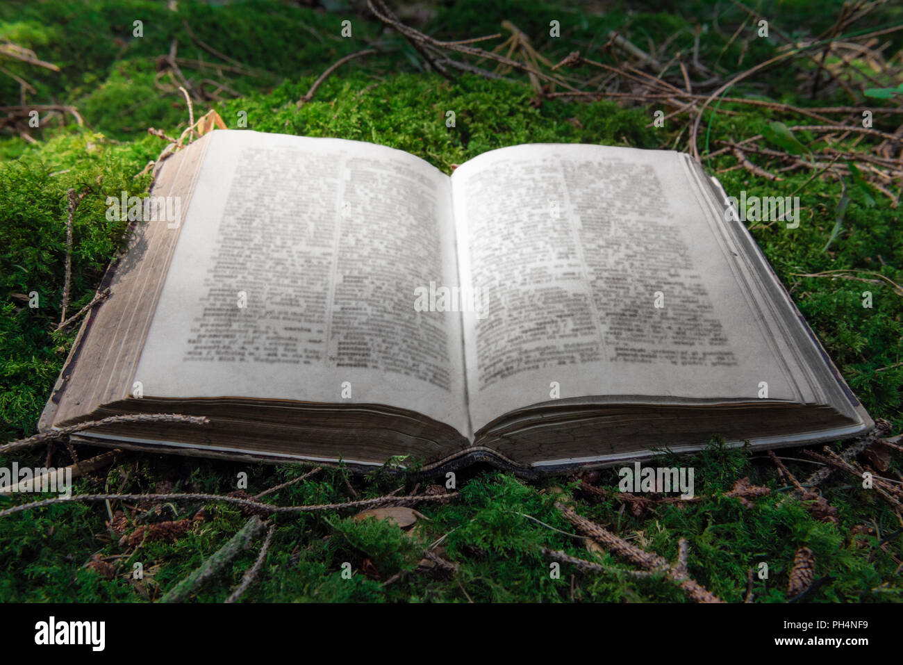 Close up image with an open old book placed on a carpet of green moss, in a forest, with a great game of lights, on a sunny day of summer. - Stock Image